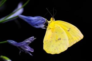 [뉴스 전에 책이 있었다] 벌·나비 없고 새가 노래하지 않는 봄