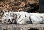 [포토] 나른한 동물원의 봄…