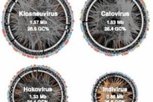 '제4 생물체' 찾았다… 스스로 에너지 만드는 바이러스