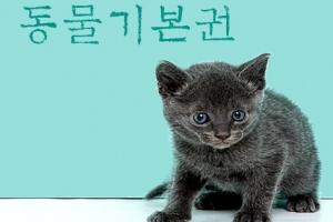 [씨줄날줄] 반려동물과 대선/황성기 논설위원