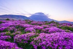 29일~새달 14일 '봄 여행주간'…떠나봄 즐겨봄