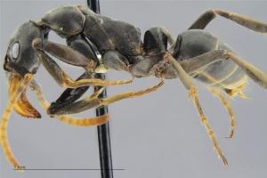 [사이언스 톡톡] 전쟁터서 동료 구하는 개미