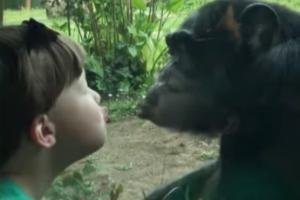 아이가 입술 내밀자 침팬지가 보인 반응