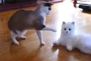 '나보다 더 진짜같네~!' 로봇캣 본 고양이들 반응