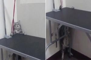 '수술이 무서워요!' 수술대 탈출하는 쇼생크탈출 고양이