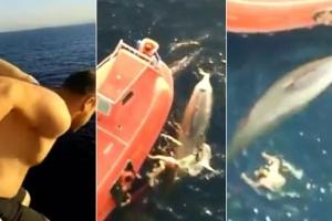 그물 엉퀸 고래 구조하려 12m 갑판서 뛰어내린 선원