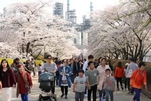 [비즈+] SK '벚꽃동산' 5만6000명 방문
