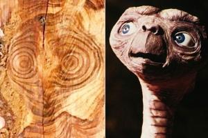 나무속 숨어있던 ET의 정체는?