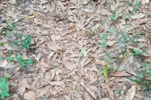 '독수리 눈에만 보이는 독사' 낙엽 위 숨은 뱀 찾기