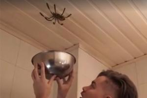 화장실에 나타난 거미 포획 작전, 결과는?