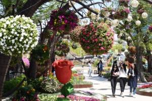 [서울포토] 화창한 봄날, 고양국제꽃박람회와 함께…