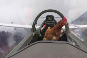 무동력 글라이더로 나는 꿈 이룬 닭, 반응은?