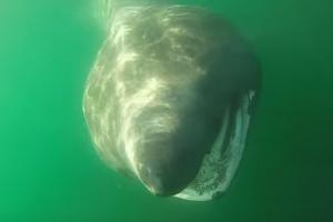 카약커들이 우연히 포착한 대형 돌묵상어