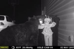 쓰레기통 뒤지던 야생곰 내쫓는 확실한 방법