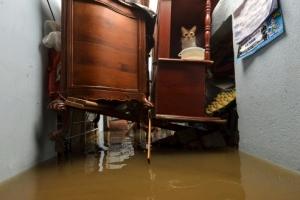 [포토] 가구 위에 올라가 홍수를 피한 고양이