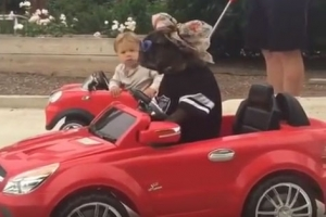 불독 운전하는 장난감 차에 추월당하는 어린 소년