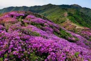 봄의 끝자락 첫사랑 같은 '분홍빛' 설렘