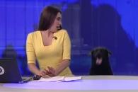 생방송 뉴스 도중 난입한 개, 앵커 반응은?