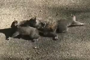서로 꼬리 얽혀 아등바등하는 새끼 다람쥐들