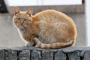 꽃길 찾아 떠나는 길고양이 로드무비…'나는 고양이로소이다' 예고편