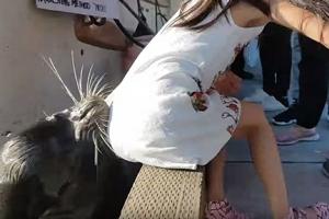 바다사자에 물린 소녀, 박테리아 감염병 치료받아