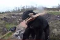 사냥꾼에게 달려드는 거대 야생 곰…공포의 순간