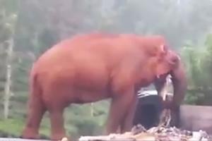 배고픈 코끼리의 슬픈 식사