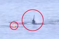 거대 백상아리 공격에도 살아남은 카약커