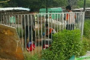 개 사육장 운영하던 60대 여성, 도사견에 물려 숨져