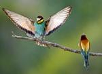 '색색의 깃털' 아름다운…