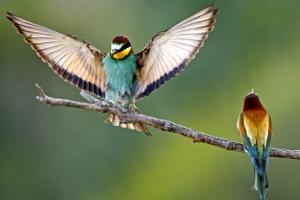 [포토] '색색의 깃털' 아름다운 자태 뽐내는 붉은벌잡이새