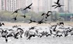 한강 위 날아오르는 민물…