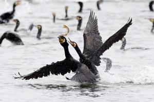 [한 컷 세상] 새들에겐 활기찬 한강