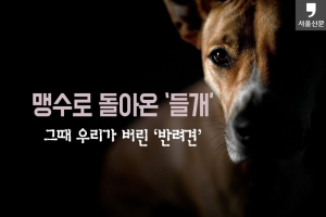 [카드뉴스] 맹수로 돌아온 '들개'…그때 우리가 버린 '반려견'