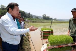 """[포토] 극심한 가뭄에 '두 번 모내기'까지…이낙연 """"중장기 대책 필요"""""""