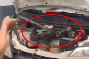 [팝영상] 미니 밴 엔진룸서 발견된 3m짜리 킹코브라