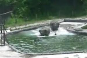 아기 코끼리를 구하라!…엄마와 이모 코끼리의 공동구출작전