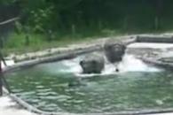 아기 코끼리를 구하라!…엄마와 이모 코끼리의 공동구…
