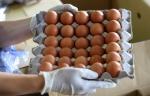 태국산 계란 매주 200만개…