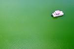 녹색으로 변한 저수지