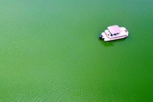 [포토] 녹색으로 변한 저수지
