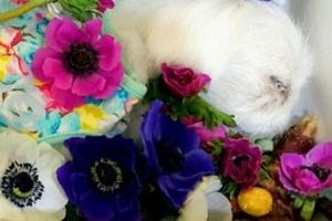 [김유민의 노견일기] 아네모네의 꽃말을 알려준 '공주'