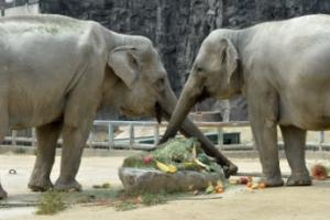여직원 성희롱 의혹으로 대기발령된 서울대공원 동물원장