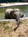 서울대공원 아기코끼리 '…