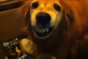 """[반려독 반려캣] """"샌드위치 몰래 먹어서 미안해요"""" 살인 미소 짓는 강아지"""