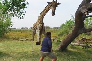 기린 가까이서 보려다 황천길 갈뻔한 남성