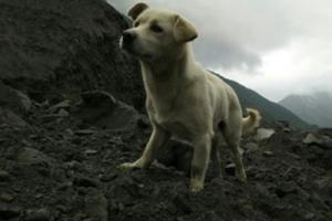 """""""개들도 사랑을 안다""""…애타게 주인 찾는 쓰촨성 강아지"""