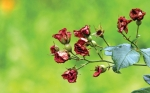 [한 컷 세상] 장미의 꽃말…