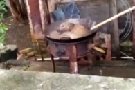 산 채로 개 끓이며 즐거워하는 사람들…누리꾼 공분