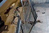 전기충격기로 개 기절시킨 뒤 납치해가는 도둑들